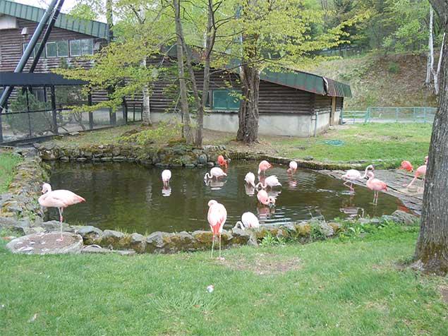 asahiyamazoo-flamingo1