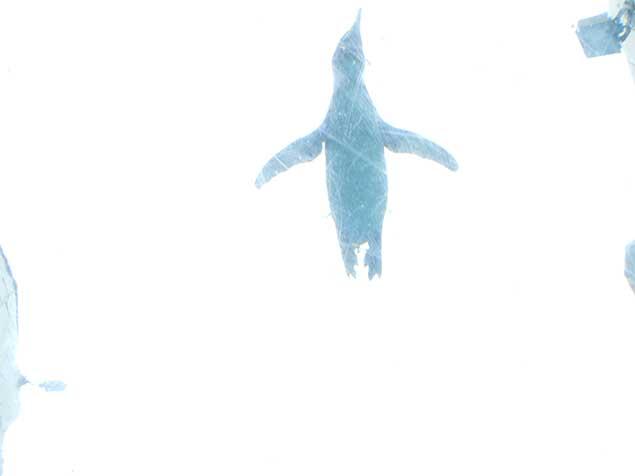 asahiyamazoo-penguin4