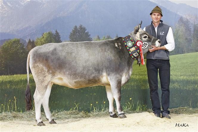 1st place heifers 2016: *WILMA (Diokus AT x Bastus AT) dob: 23.02.2014; Thomas Santer, Sölden, TGV.