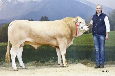BFRS-2016 Blonde d'Aquitaine43