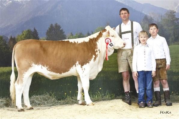 National Champion 2016: ZAPFERL (Ramses AT x Heinz AT), dob: 22.09.2014 Family Mooslechner, Flachau, RSTM. (Foto: Stephan Hauser)