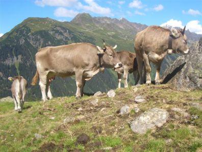 alpe-alpgues-2006