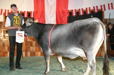 Bundessiegerin Tiroler Grauvieh und 1. P.: CONTESSA (V: Stelo) von Toni Ostermann, TGV (Foto: Landwirt.com)