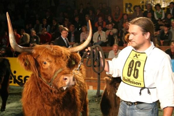 Oliver Behringer, KRZV, mit YUWEL (V: Crabat DE) - Erstplatzierte in ihrer Gruppe, Bundessiegerin Schottisches Hochlandrind und Superchampion weiblich der extensiven Rassen (Foto: Landwirt.com)