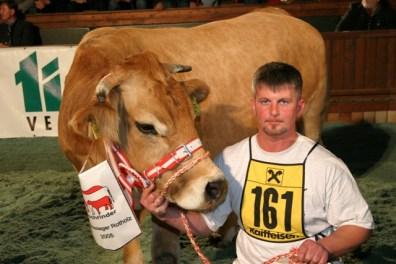 Bauxl von Fam. Hofer (RSTM) war erstplatzierte der Murbodner Kühe wurde zur Bundessiegerin. (Foto:Landwirt.com)