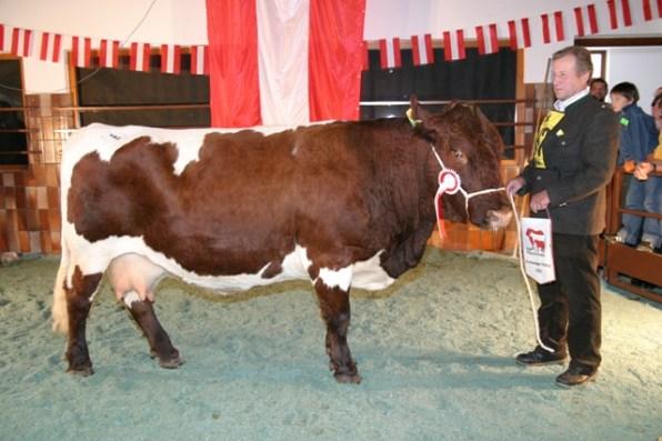 Bundessiegerin Bregenz (Haller-Watzer AT); Dick Helene, 5751 Maishofen, RZS (Foto: Landwirt.com)