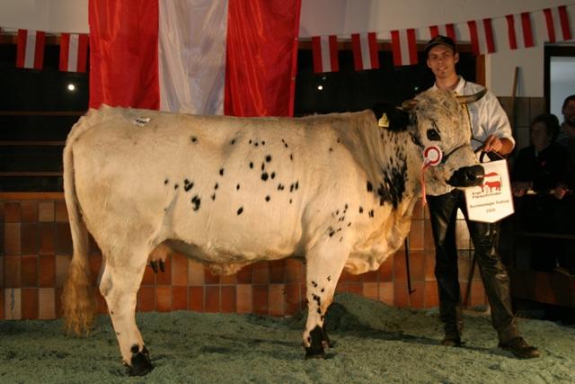 1. Platz u. Bundessiegerin Pustertaler: ESTASIA PSS (V: Polzer) von Karl Schardax, TFR (Foto: Landwirt.com)