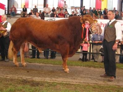 Bundessieger und erstplatziert in der Gruppe Limousin Altstiere: Plik (V: Loyal) von Fam. Rauchenberger, Türnitz