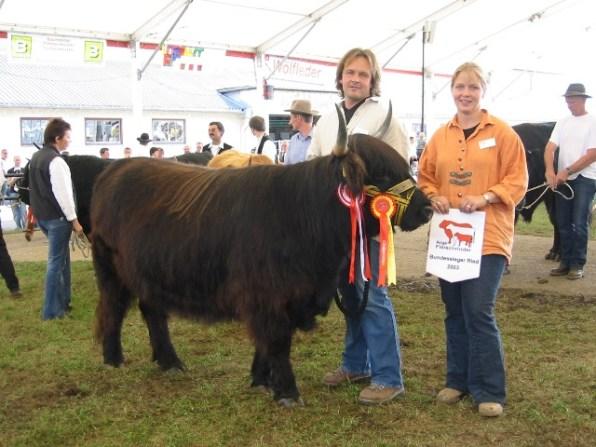 Bundessiegerin und 1. Platz in der Gruppe Kalbinnen: Josi (V: Natan) von Familie Widmann, Scheffau