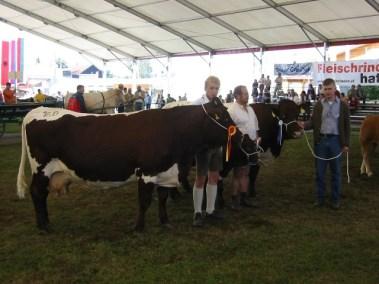 Zweitplatziert in der Gruppe trächtige Kühe: Muster (V: Gori) von Franz scharler, Mittersill