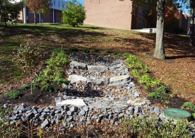SUNY Stormwater Plantings