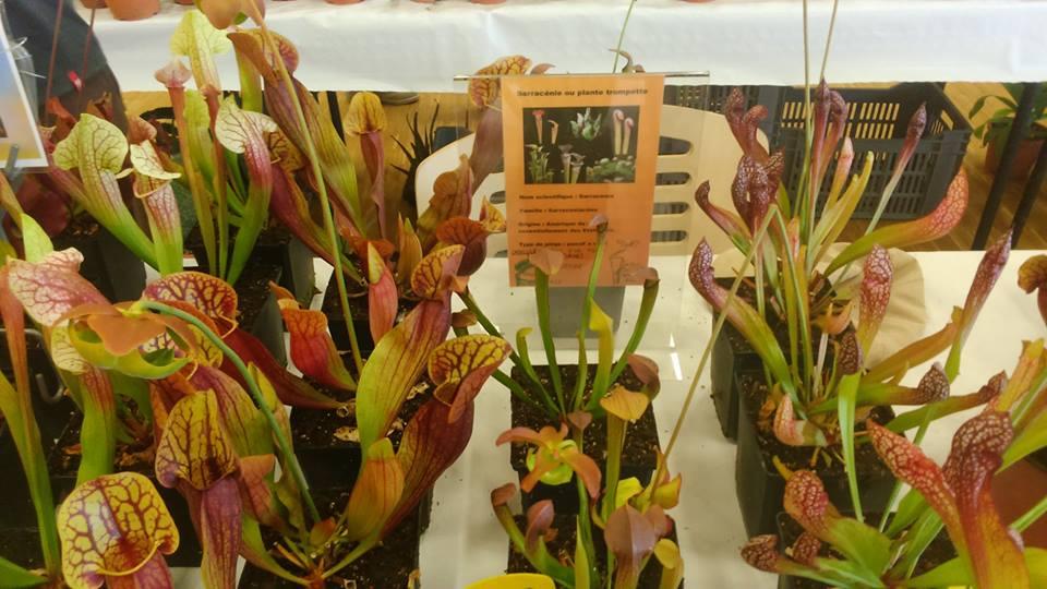 Foires aux plantes