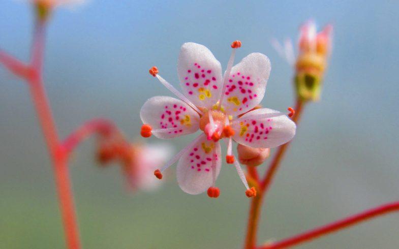 fleur de …