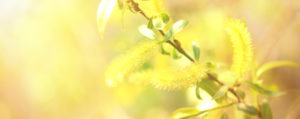 bachbluete-No-38-willow-dotterweide