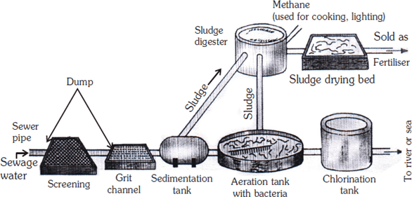 NCERT Class 7 Science Model Paper 2 Questions and Answers
