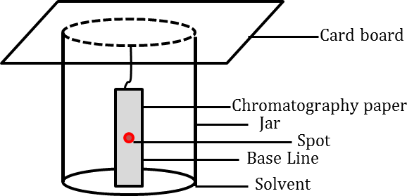 Chemistry Class 11 NCERT Solutions: Chapter 12 Organic