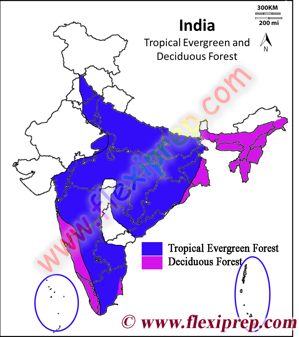 The amazon forests support _____forest a)decidious b)evergreen c)coniferous d)temperate get the answers you need, now! Ncert Class 9 Geography Solutions Natural Vegetation And Wild Life Contemporary India I Chapter 5 Part 4 Flexiprep