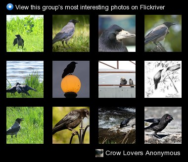 Crow Lovers Anonymous - View this group's most interesting photos on Flickriver