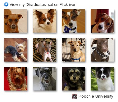 Poochie University - View my 'Graduates' set on Flickriver