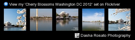 Dasha Rosato Photography - View my 'Cherry Blossoms Washington DC 2012' set on Flickriver