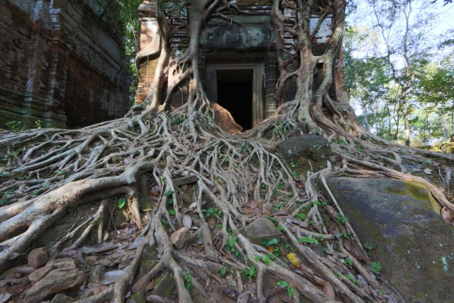 Trees are Taking Over, Cambodia