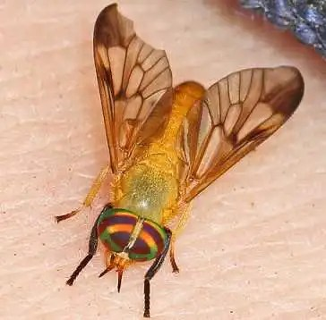 How to Get Rid of Yellow Biting Flies