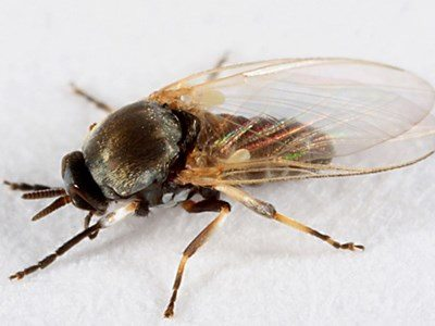 30 Ways To Get Rid Of Gnats Inside And Outside The House