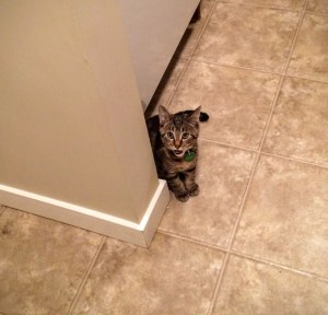 How Being a Kitty Parent is Like Being a Human Parent