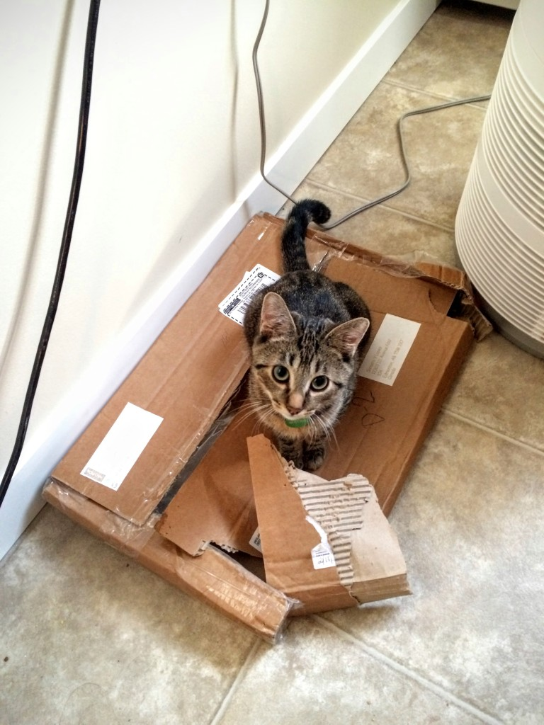 Matrix Monday: Places Kittens Will Go That You Definitely Don't Want Them To | www.flightandscarlet.com