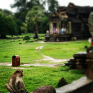 Busabout Cambodian Adventure Angkor Wat Monkey