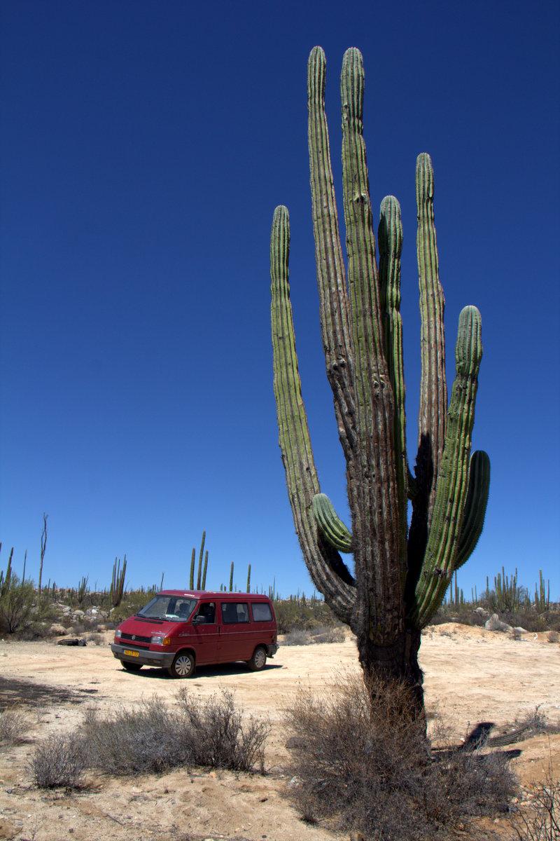 Tiny van next to big cactus