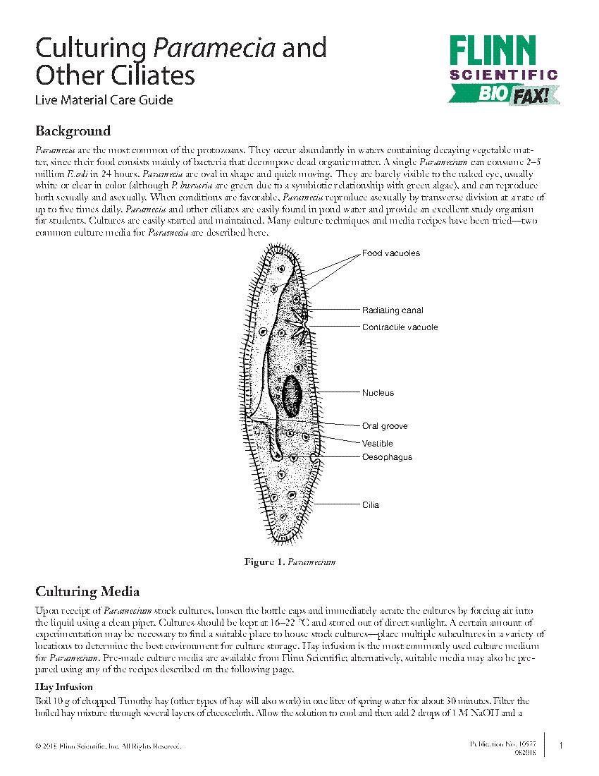 diagram of paramecium [ 850 x 1100 Pixel ]