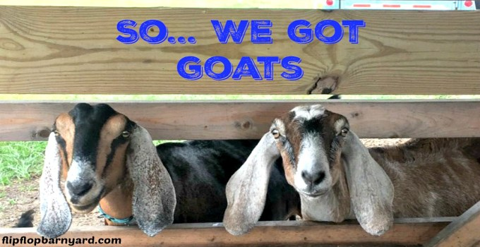So… We Got Goats