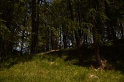Schatten spendender Wald