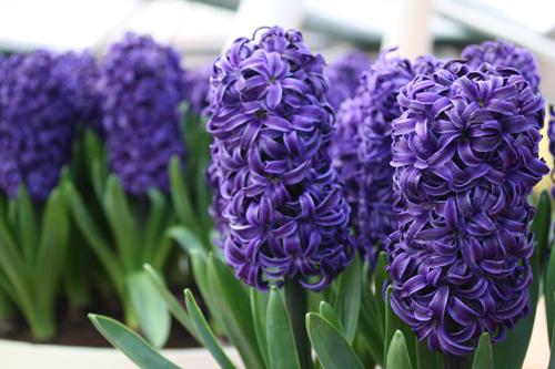 Fall Daisy Wallpaper Flower Guide Flirty Fleurs The Florist Blog