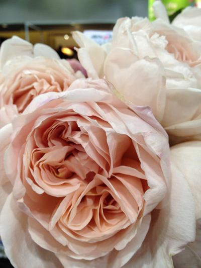 World Floral Expo  Roses  Flirty Fleurs The Florist