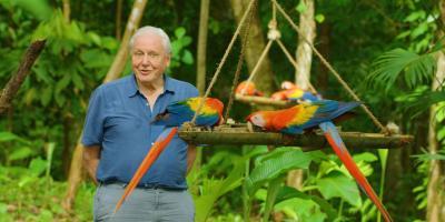 Attenborough color header