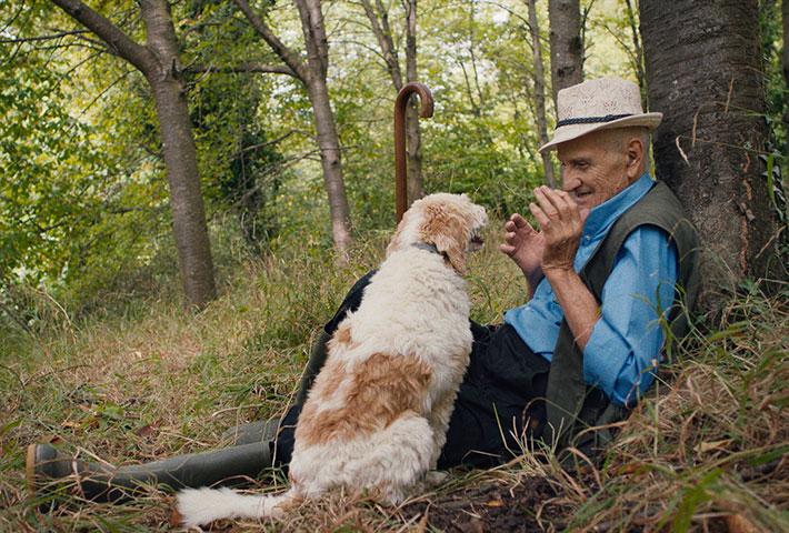 Truffle Hunters dog