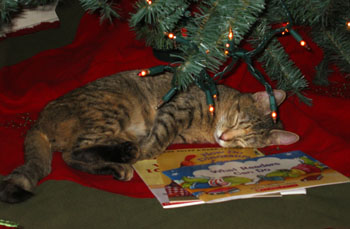 Momo asleep under the tree