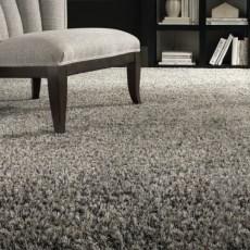 Shagariffic Carpet