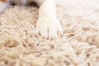 Tips for Picking the Right Pet Friendly Carpet - Heating ...