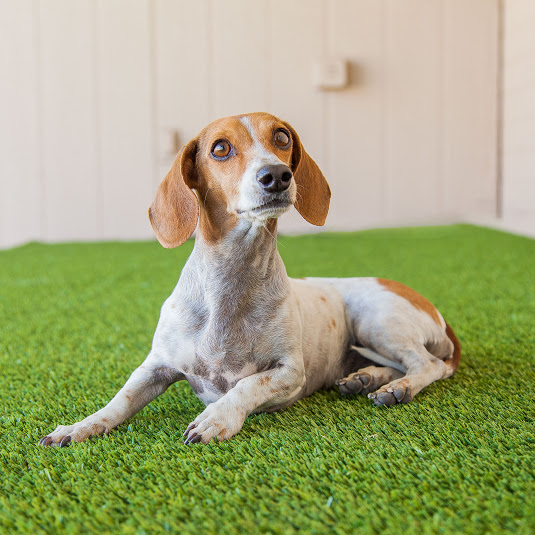 Dogs And Hardwood Floors: What's The Best Flooring For Dogs?