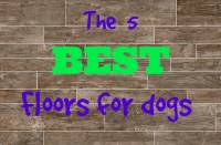 What's the Best Flooring for Dogs? - FlooringInc Blog