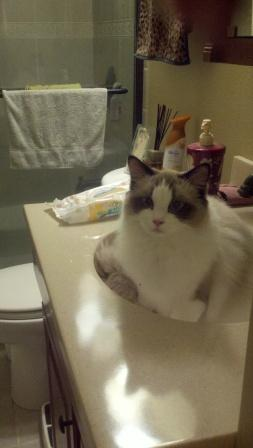 Emmie in the bathroom sink loved by Janet Swilley