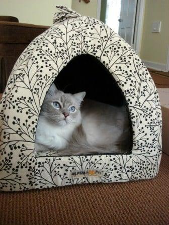 Trigg in the Napper Cat Den