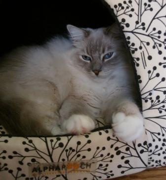 Trigger in the Napper Cat Den