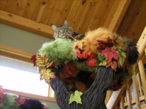 cat climbing trees