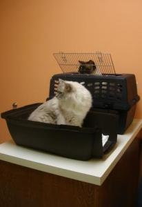 Charlie and Trigg at the vet