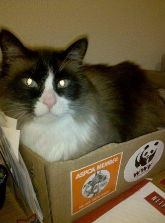 "Reader Jana O'Grady said, ""Here's Hunter watching me work. He stays in this box ALL day long. The box even made a move with us from NC to NY."""