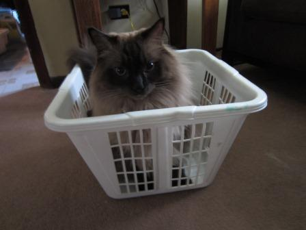 Cooper in a Laundry Basket loved by Jeff Jancek